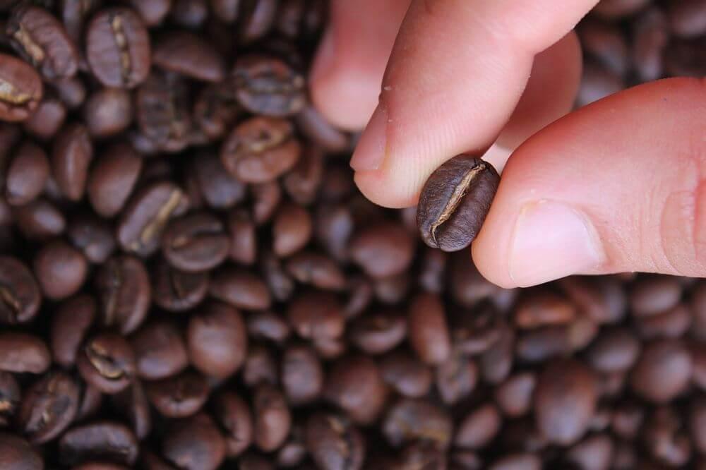 カフェイン量は焙煎度合いに左右されない