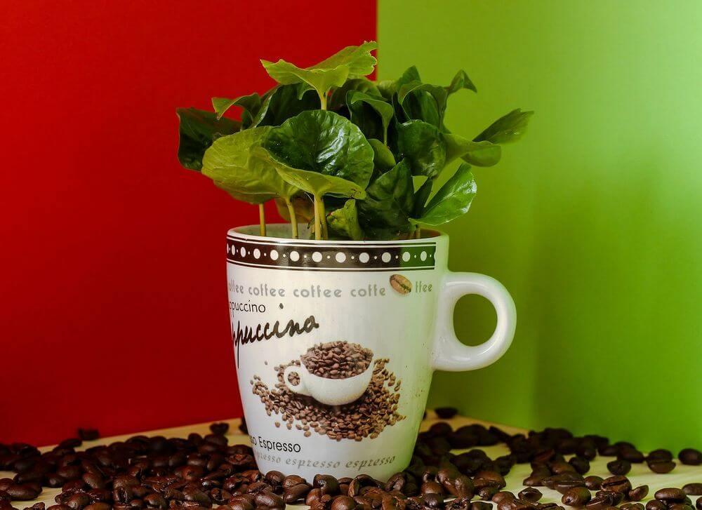 コーヒー豆のかすが消臭効果を発揮する場所