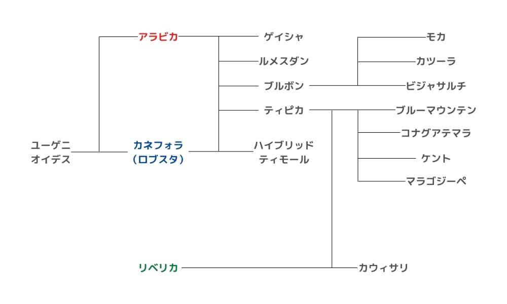 主な品種の系統樹